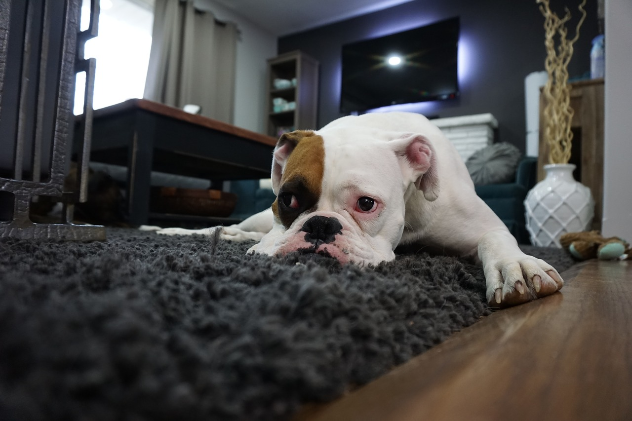pet carpet cleaning